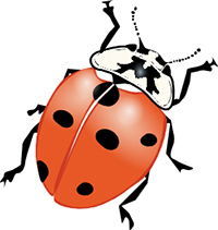 Lady beetle thumb