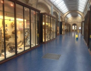 NHM mammal corridor